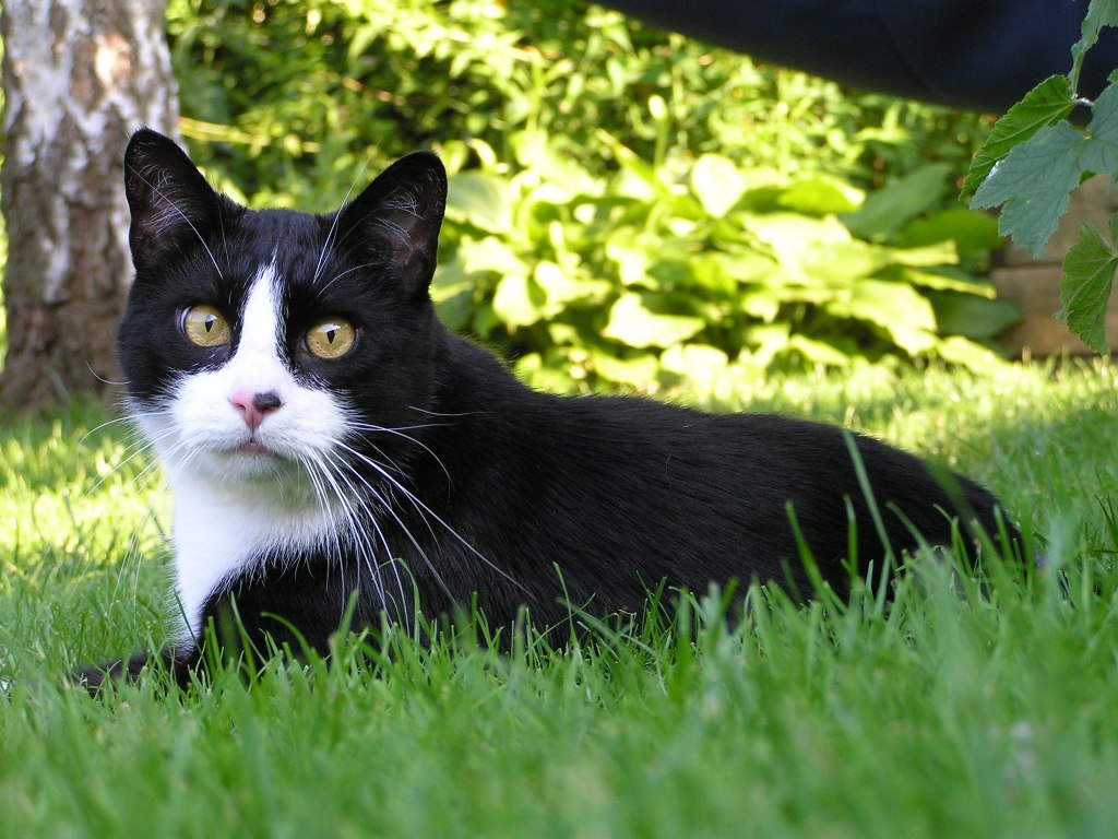 Cats and how to keep them out of your garden