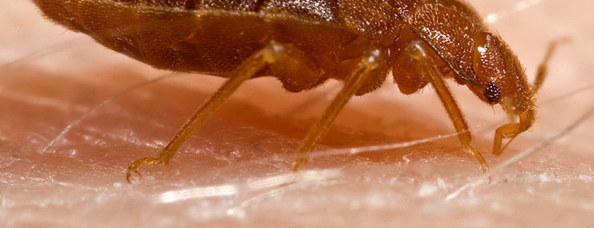 An excellent Bed Bug video from National Geographic with over 4.5 million views.
