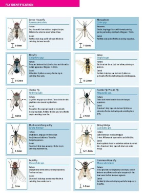 fly identification