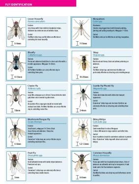 fly identification