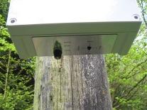 Sentinel 4 way ultrasonic cat bird pigeon fox badger repeller deterrent control panel base2
